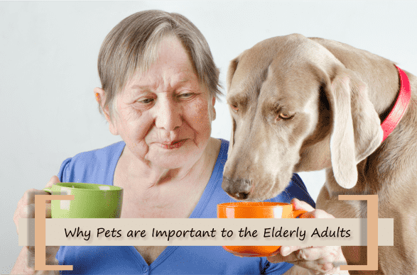 Why Pets are Important to the Elderly Adults
