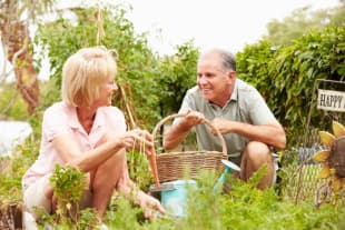 Putting Your Green Thumb to Use Seven Benefits Elders Can Reap from Gardening